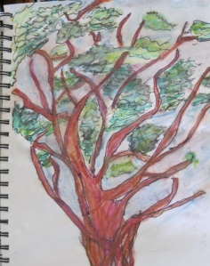 "Manzanita. Ink and watercolor. 8"" by 12"". Sharyn Dimmick."